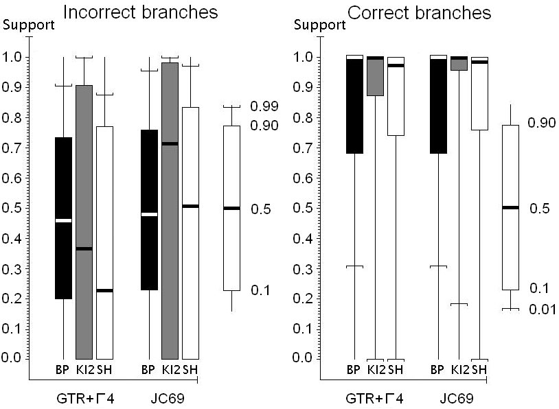Branch supports